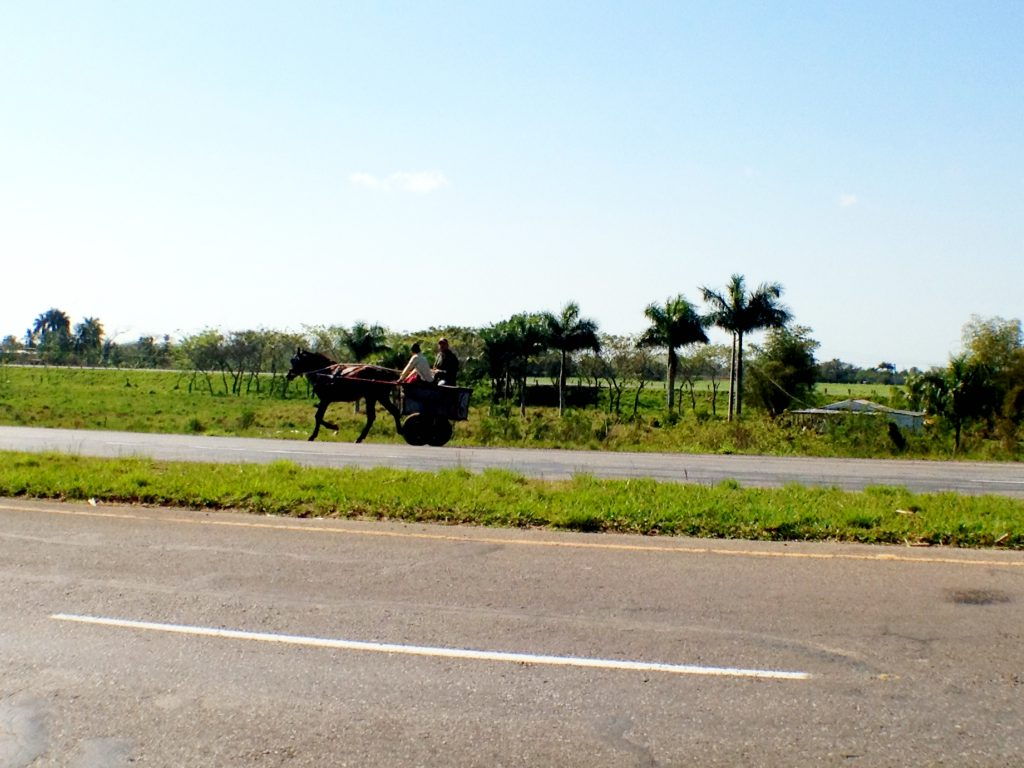 Common vehicle on Cuban highways: horse and cart.