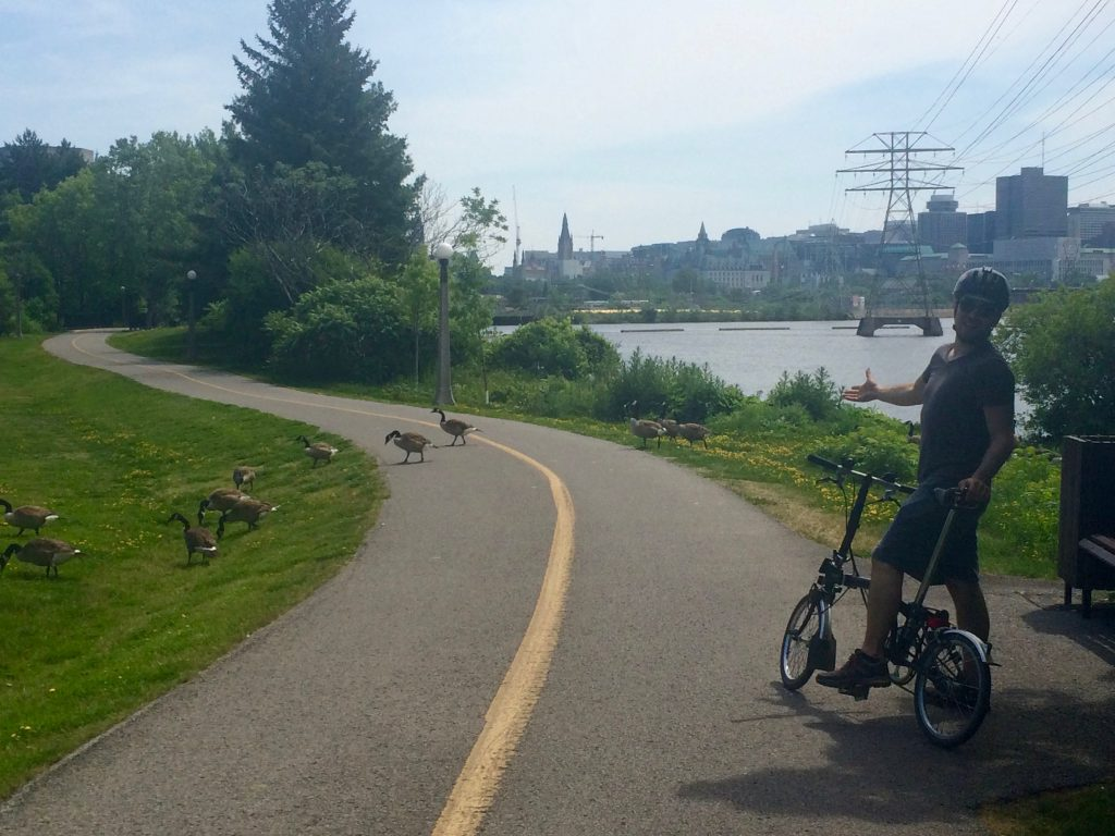 149 Canada Geese crossing (1)