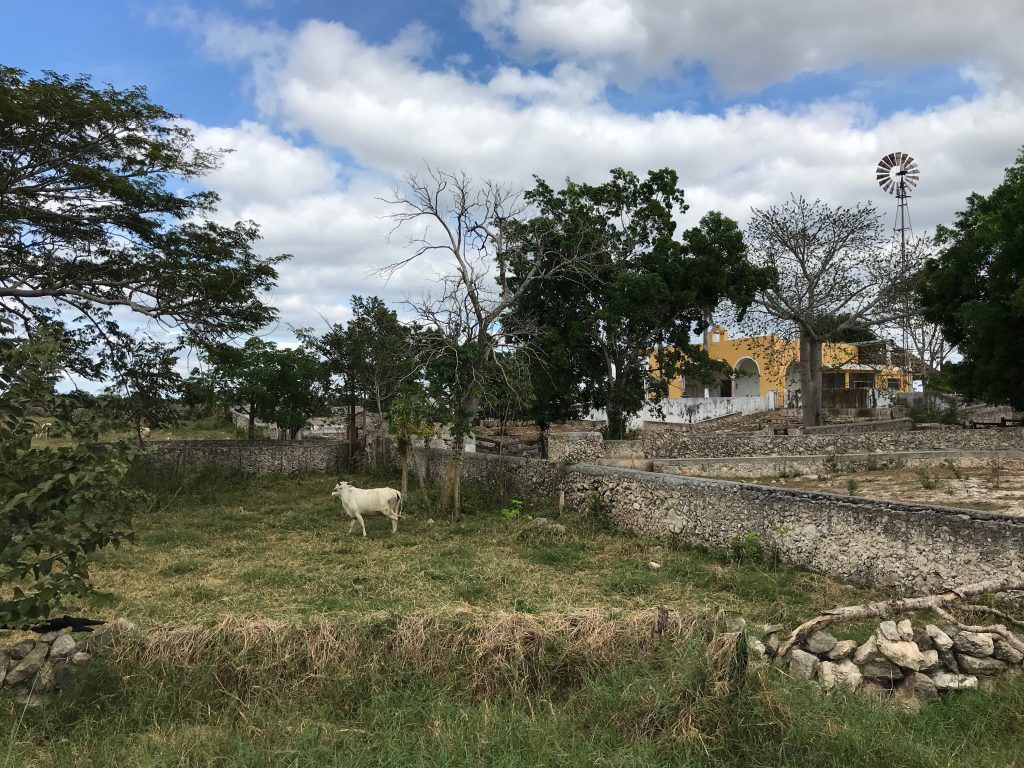 Ranch east of Sudzal, Yucatan, Mexico
