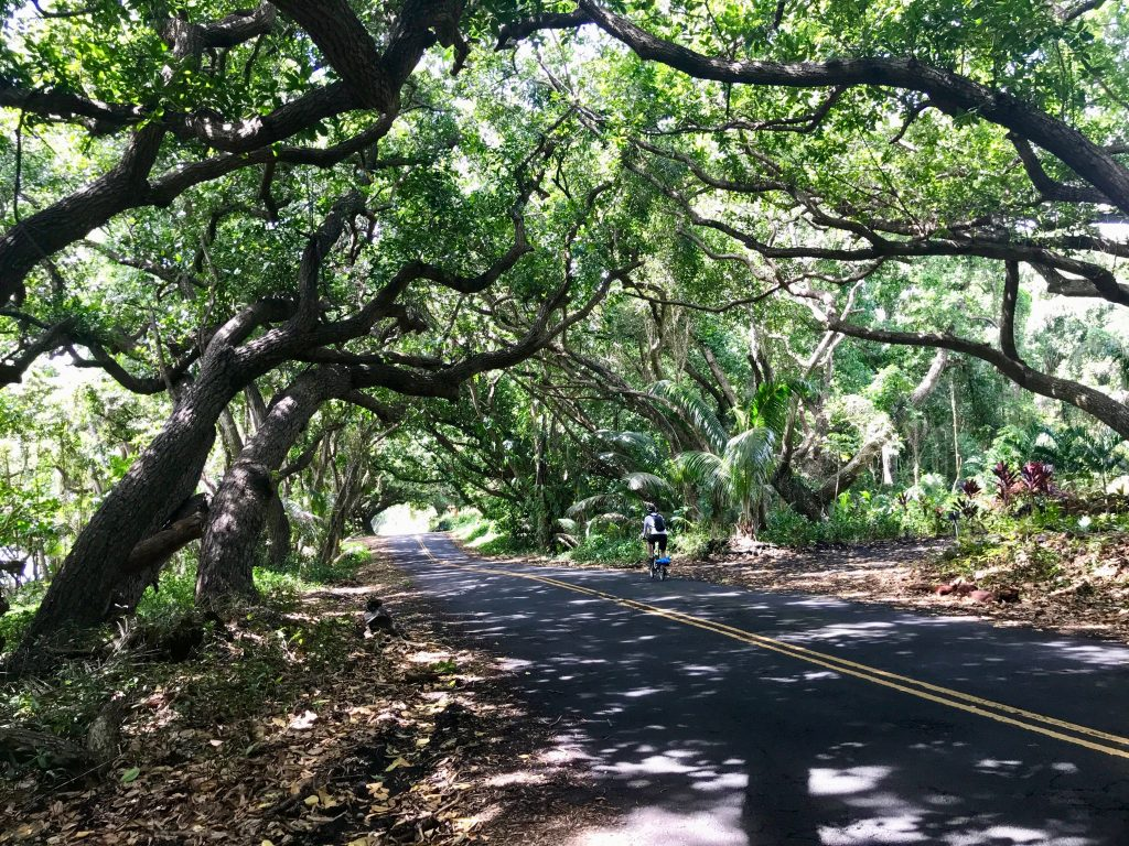 Tree canopy over The Red Road. Puna, Hawaii