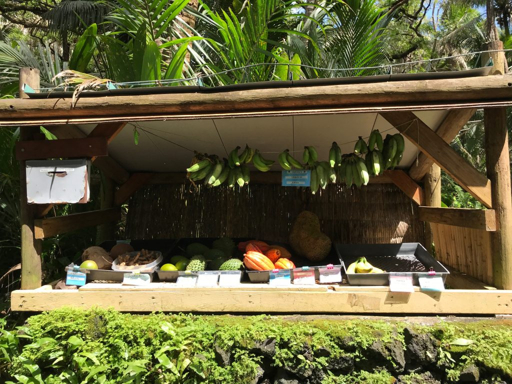 Self-serve fruit stand. Puna, Hawaii
