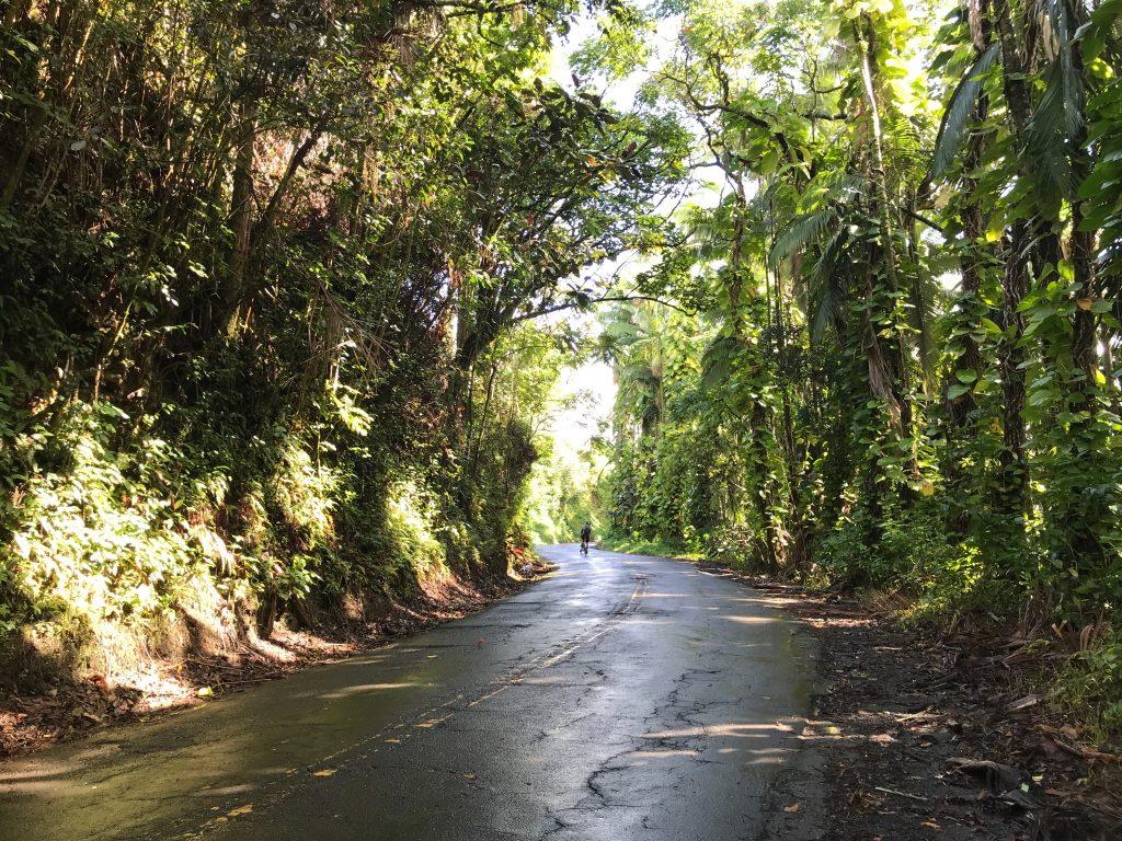 Old Mamalahoa Highway Scenic Drive, The Big Island, Hawaii